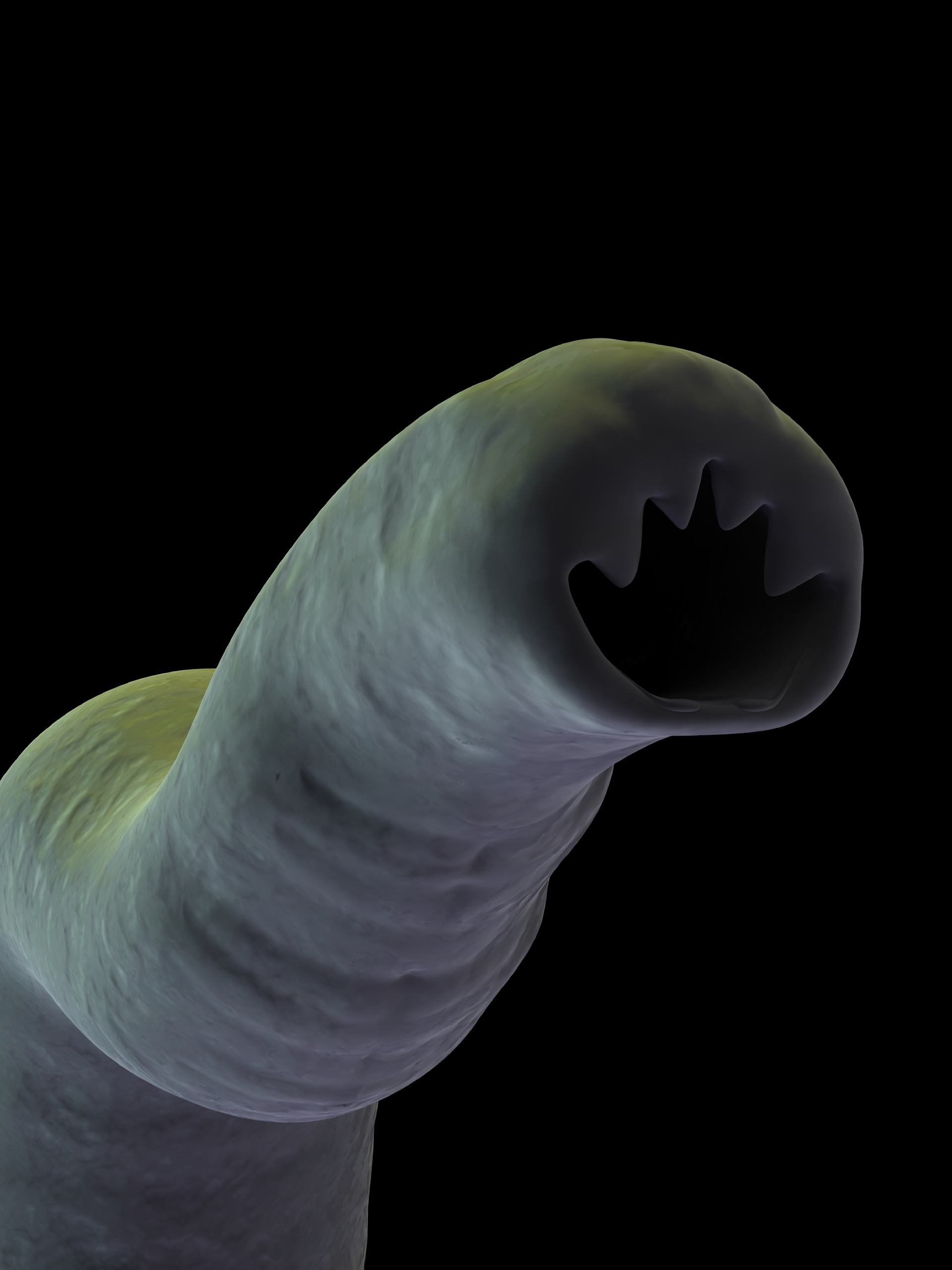 Hookworm in humans face