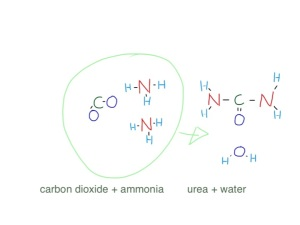two molecules of ammonia combine with one of carbon dioxide to make urea and water - its not as simple as that - but that is what the urea cycle does