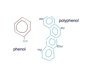 polyphenols are large molecules made up of lots of phenols - they are useful antioxidants which trap oxygen radicals