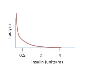 lipolysis is controlled by insulin levels in the blood - in non-diabetics insulin secretion does not drop below about 0.5 units/hr - type 1 diabetics can have no insulin and lipolyisis is unrestrained