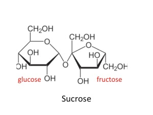 sucrose is a disaccharide of glucose and fructose